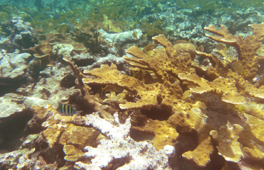 Insights Into Coral Bleaching Could Help Preserve Reefs
