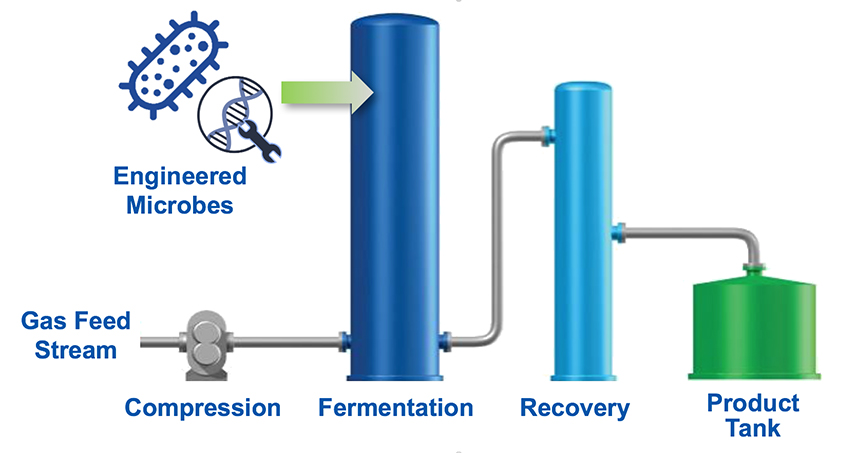 Schematic showing the process of making biofuels and bioproducts from bacteria.