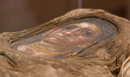 Art and Science of Mummies